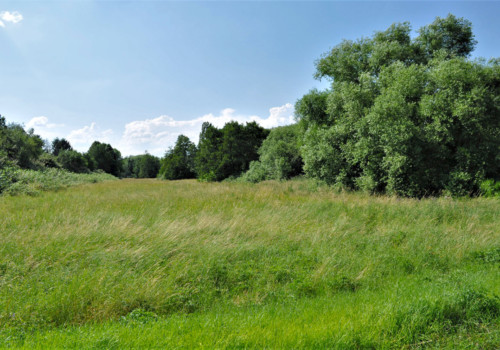 Wald u. Wiesen Rumpenheim